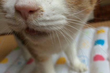 猫とザブポン